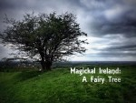 Magickal Ireland : A Fairy Tree