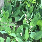 Herbal Magick: Lily of the Valley
