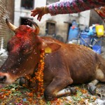 Why Do Hindus Not Eat Beef [Google Questions Answered]