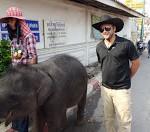 MJ baby elephant