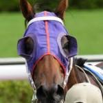 horseblinder