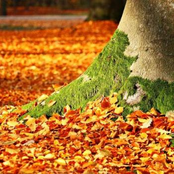 Lessons of Autumn's Holy Mess