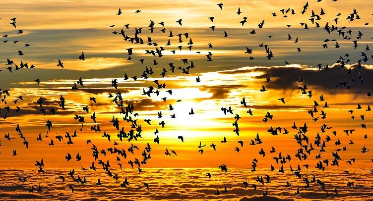 Autumn Dawn with Migrations of birds