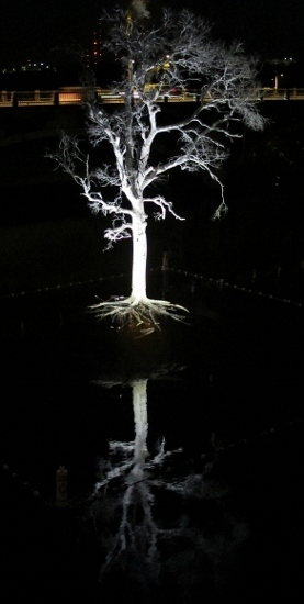 A Tree Dies in Texas -- And Is Brought Back to Life by Art