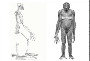Disproving Evolution - Part 11