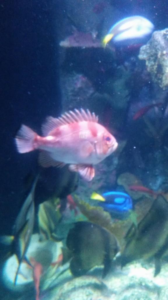 Morning Happiness Kansas City Aquarium